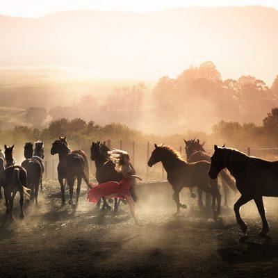 daviddrebin, fashion, photography, horses