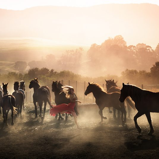 daviddrebin, fashion, photography, horses