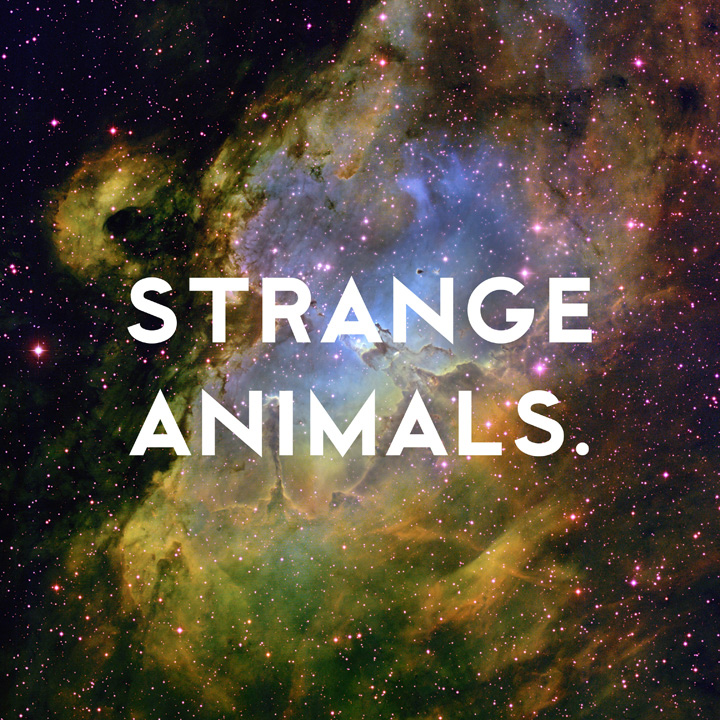Strange Animals by Donny Miller