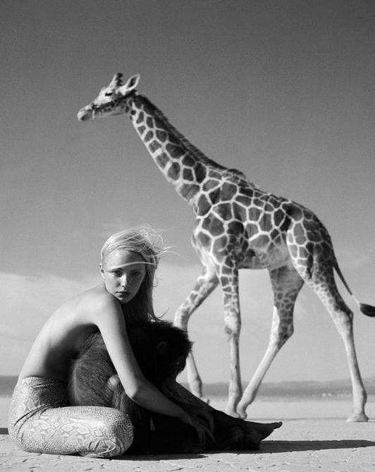 Jamie Rishar Giraffe  by Michel Comte (B&W)