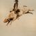 The Bull Rider by Ryan McCann, RyanMcCann, McCann, Graphic,