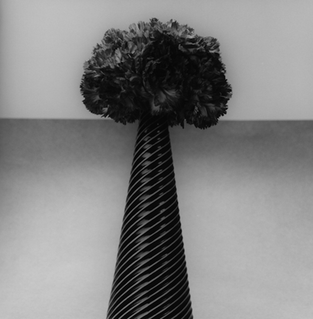 Carnations by Robert Mapplethorpe