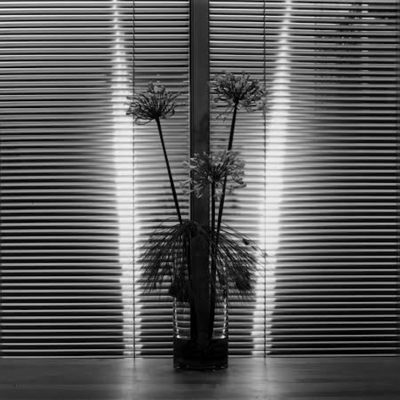 Flower by Robert Mapplethorpe, robertmapplethorpe, mapplethorpe