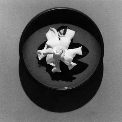 Gardenia by Robert Mapplethorpe, mapplethorpe, robertmapplethorpe