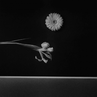 Iris and Zinnia by Robert Mapplethorpe , robertmapplethopre, mapplethorpe, photography
