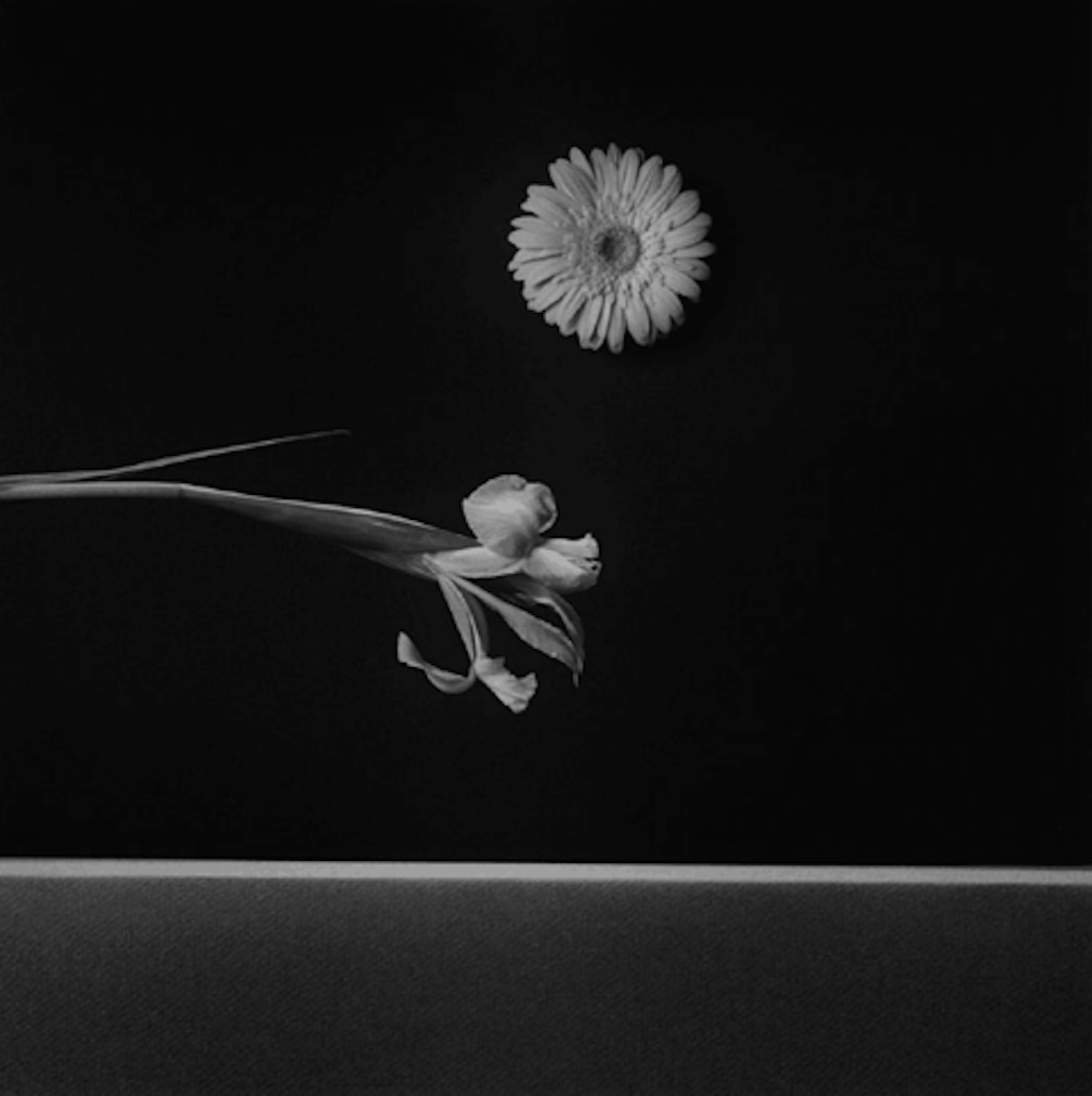 Iris and Zinnia by Robert Mapplethorpe