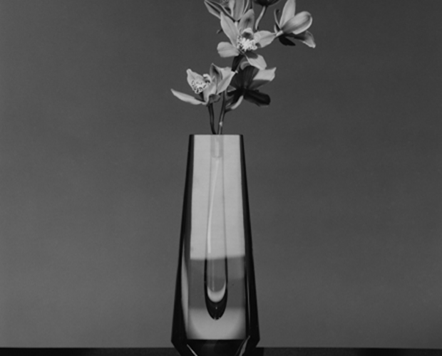 Orchid 1982 by Robert Mapplethorpe , robertmapplethorpe, mapplethorpe