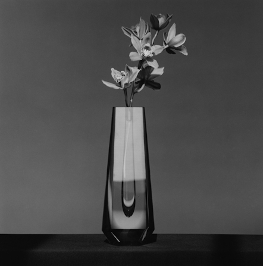 Orchid 1982 by Robert Mapplethorpe