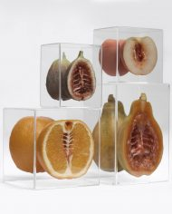 Hybrids Serie Image 2 by Monica Piloni