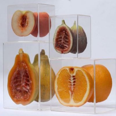 Hybrids Serie by Monica Piloni