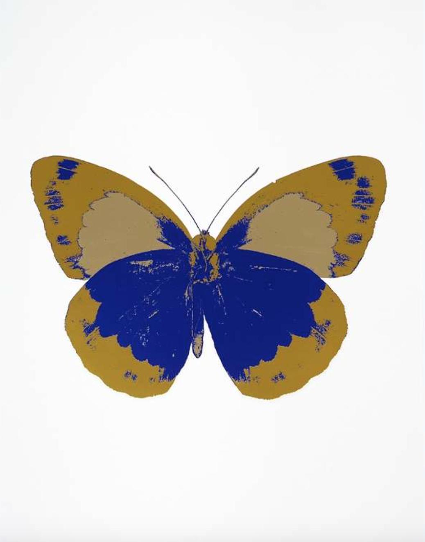 butterflyT he Souls II